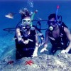 Marine life and scuba diving in Turkey